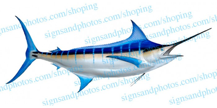 Marlin Decal - Blue fin boat decals